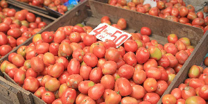 Tons of tomatoes are getting rotten on farms