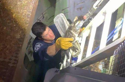 Look: Kitten rescued from 20-foot deep storm drain on Long Island