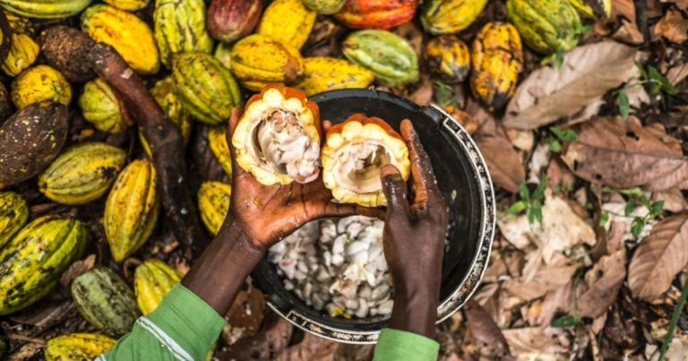 Cocoa farmers' price to be increased to GH¢8,000 per tonne