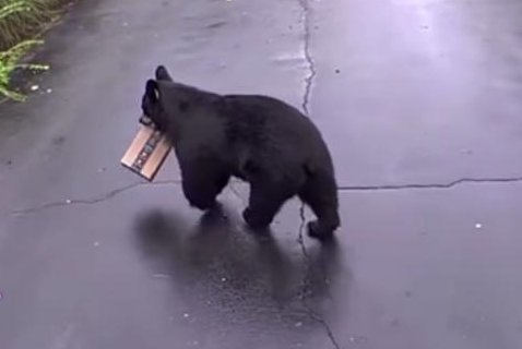 Watch: Bear steals Amazon package from Connecticut woman's front step
