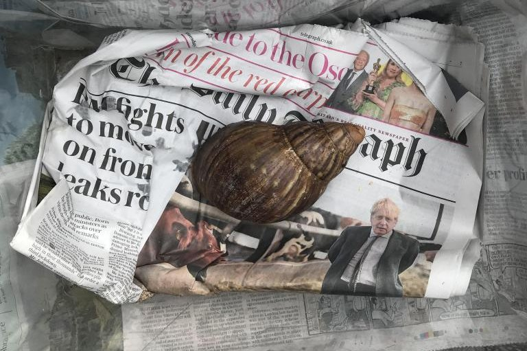Giant African land snail found at package distribution center in Britain