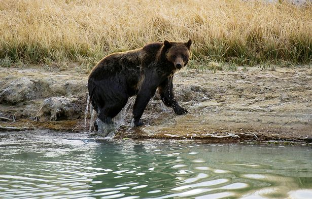 The bear's body was found on the Burger Pass trail, near Field, British Columbia