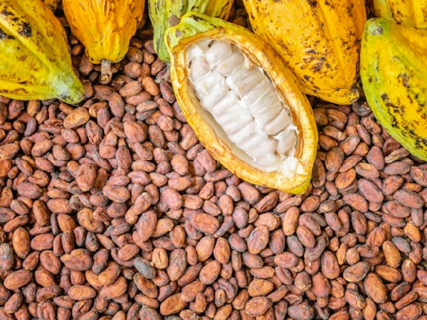 We require competitive cocoa freight rates for 2021/2022 cocoa season