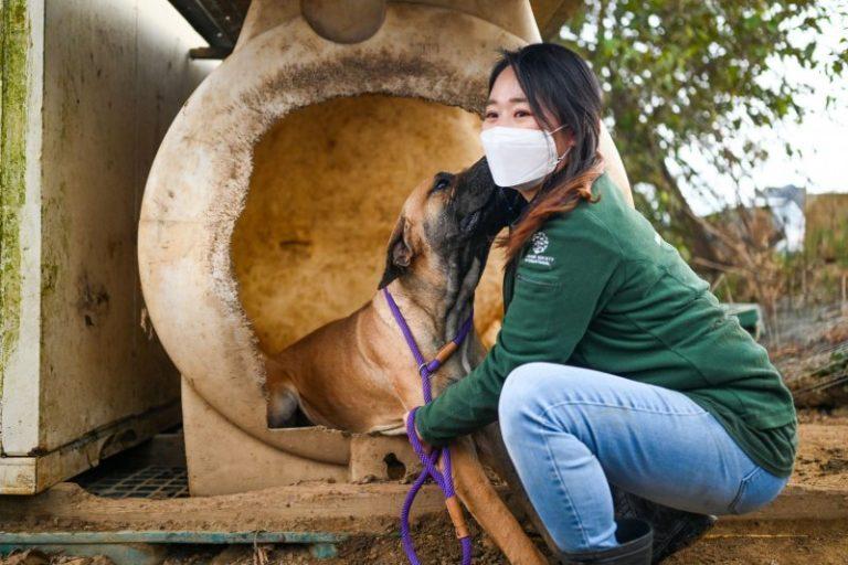 South Korean President Moon Jae-in raises ban on eating dog meat