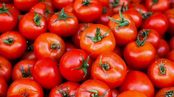 Tomatoes in season, sharp drop in prices