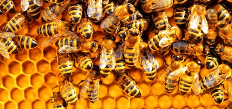 Bees hold church members, residents hostage