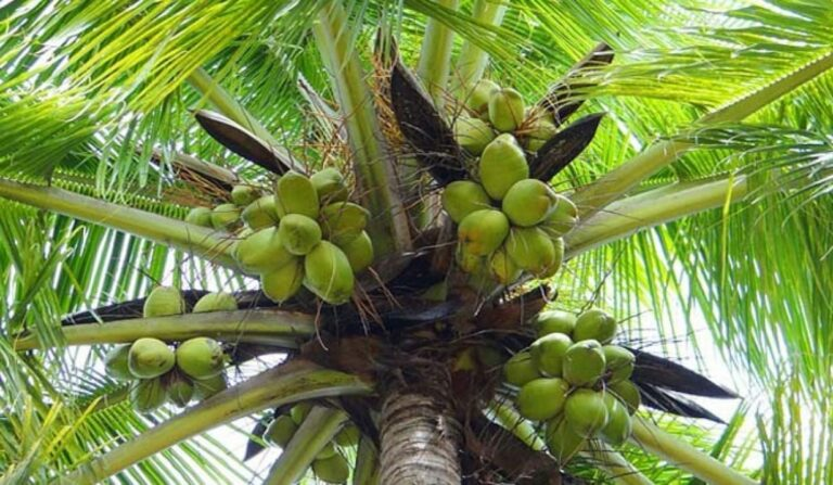 Coconut Federation threatens to sue creator of 'blood coconut' viral video