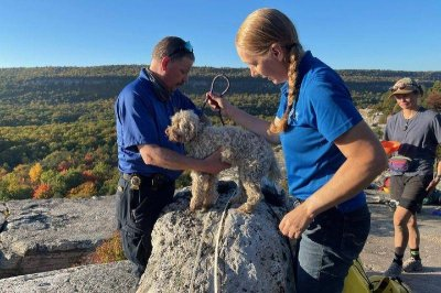 Look: Dog rescued from cave in New York park after five days